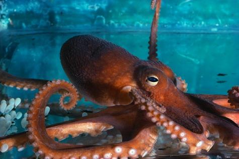 octopus (2)
