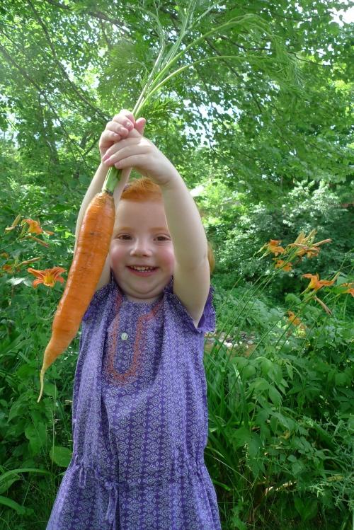 carrot (2)