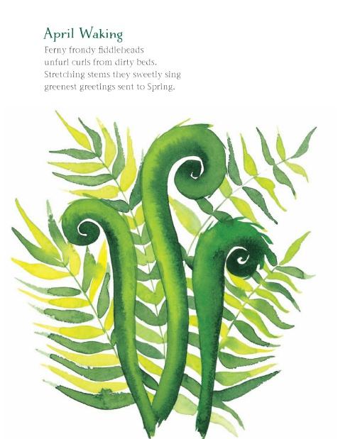 fern crop 500