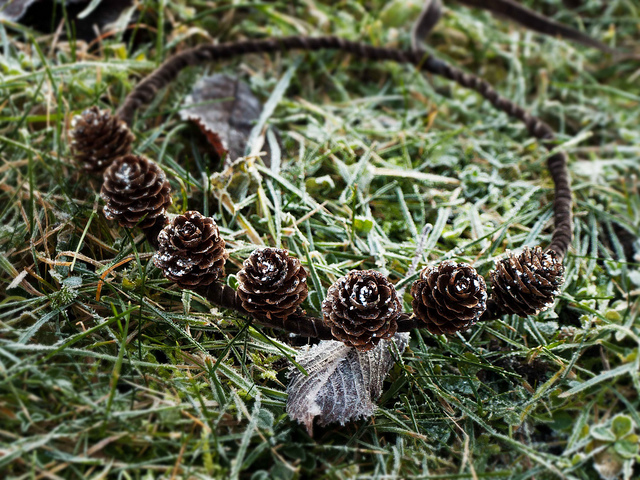 pinecone headband