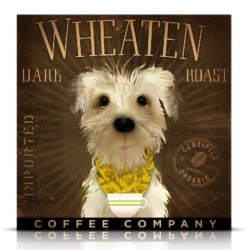 wheaten