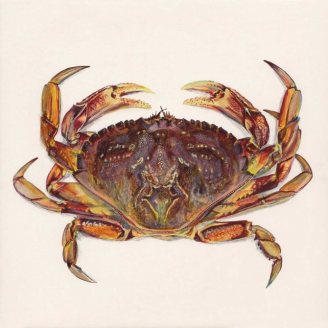 dungress_crab