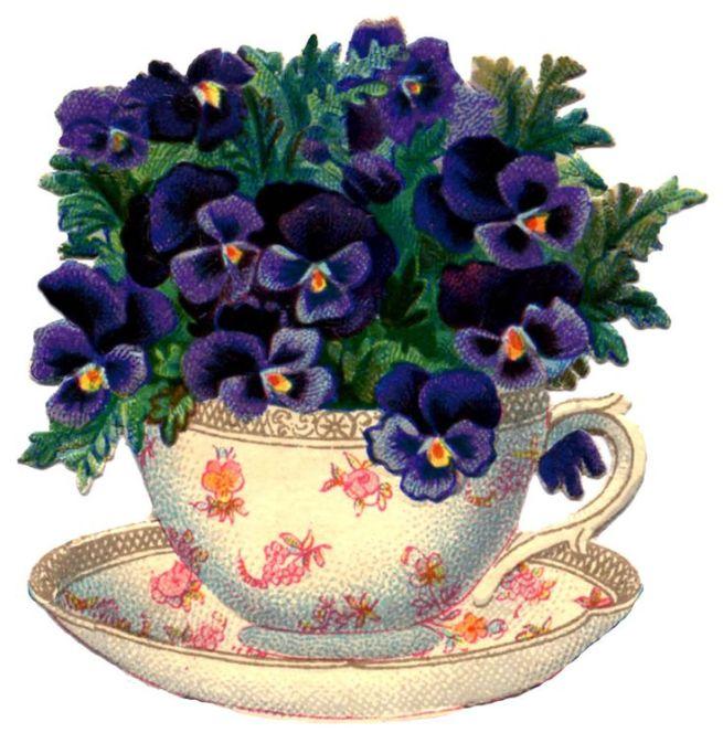 pansies teacup
